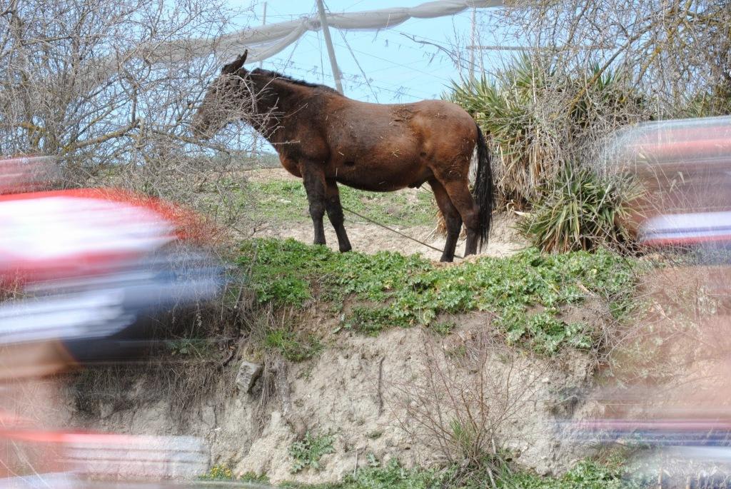 Aborto de foto de un caballo y el pelotón pasando. Un experimento fallidísimo.